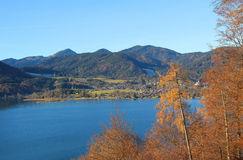 vue-au-tegernsee-de-lac-arbres-de-mélèze-automnaux-39255072